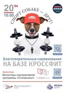 Спорт собаке друг (Копировать)